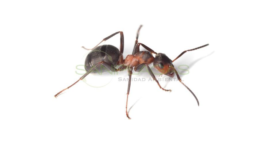 Desinsectaci n de insectos en matar maresme y barcelona - Que hacer contra las cucarachas ...